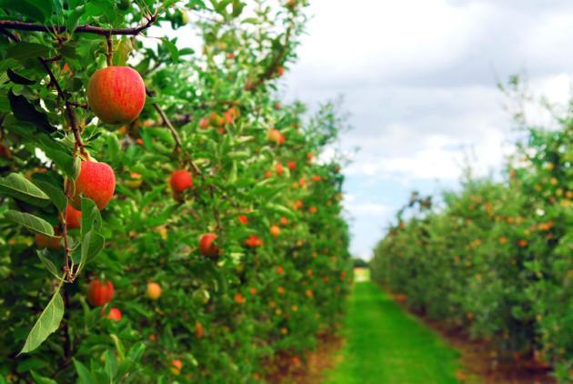 Плодовые деревья и кустарники россии